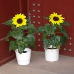 Blumengruß an der Tür