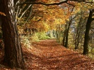 Der Herbst beginnt
